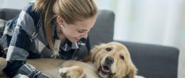 Móveis para animais de estimação: como decorar o espaço pet